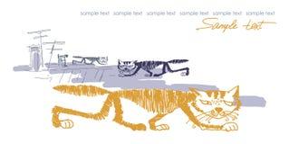 Ilustração dos gatos do vetor isolada no branco Imagem de Stock