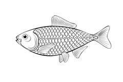 Ilustração dos peixes Imagem de Stock