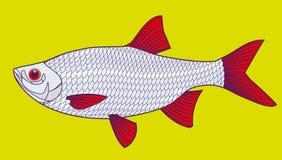 Ilustração dos peixes ilustração stock
