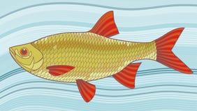 Ilustração dos peixes ilustração royalty free