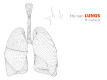 Ilustração dos pulmões - orgânico humano da parte Imagem de Stock