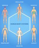 Ilustração dos sistemas do corpo humano do vetor Fotos de Stock