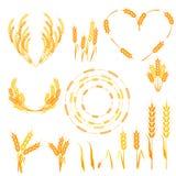 Ilustração dos spikelets do trigo ilustração royalty free