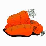 Ilustração dos vegetais Cenoura Fotografia de Stock Royalty Free