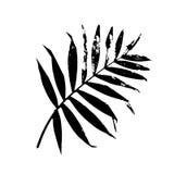 Ilustração em folha de palmeira do vetor ilustração do vetor