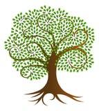 Ilustração espiral do vetor da árvore Fotografia de Stock Royalty Free