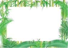 Ilustração exótica da bandeira da selva ilustração do vetor