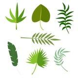 Ilustração exótica do vetor da folha do verde da selva do verão tropical da palma das folhas Fotografia de Stock