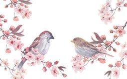 Ilustração feito a mão da aquarela do pardal Fotos de Stock