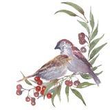 Ilustração feito a mão da aquarela do pardal Fotografia de Stock
