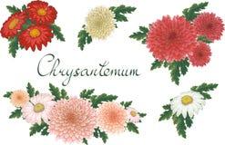 Ilustração floral do vetor com crisântemo Elementos isolados em um fundo branco Dourado-margarida diferente da cor para o seu ilustração stock