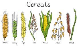Ilustração hand-drawn dos cereais Imagens de Stock