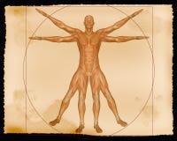 Ilustração - homem do músculo Imagem de Stock