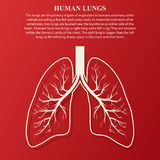 Ilustração humana da anatomia do pulmão ilustração stock