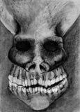 Ilustração humana do crânio Fotografia de Stock