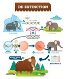 ilustração infographic do vetor da De-extinção Processo com híbrido animais ilustração do vetor