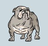 Ilustração inglesa engraçada do buldogue Imagens de Stock