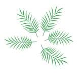 Ilustração isolada da folha de palmeira vetor ajustado Fotos de Stock