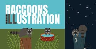 Ilustração lisa dos guaxinins Comportamento dos animais ilustração do vetor