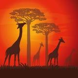 Ilustração lisa sobre o projeto de África Imagens de Stock Royalty Free