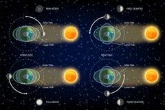Ilustração lunar e solar do vetor do diagrama das marés ilustração stock