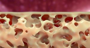 Ilustração médica da estrutura do osso ilustração royalty free