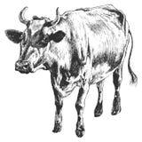 Ilustração monocromática com vaca Fotos de Stock