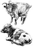 Ilustração monocromática com vaca e cabra Imagem de Stock