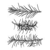 Ilustração monocromática do vetor dos ramos do abeto Imagem de Stock Royalty Free