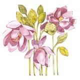 Ilustração na aquarela da flor do lírio Cartão floral com flores Ilustração botânica ilustração stock