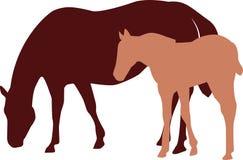 Ilustração nova do cavalo e da égua Ilustração Stock
