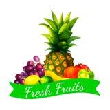 A ilustração orgânica fresca tirada mão dos frutos da aquarela ajustou-se no fundo branco Imagem de Stock Royalty Free