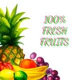 A ilustração orgânica fresca tirada mão dos frutos da aquarela ajustou-se no fundo branco Imagens de Stock
