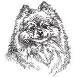Ilustração pequena do desenho da mão do vetor de Pomeranian Imagem de Stock