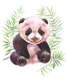 Ilustração pintado à mão da aquarela Panda nos ramos verdes ilustração do vetor