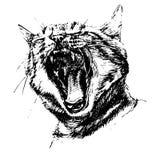 Ilustração preto e branco com um gato Foto de Stock
