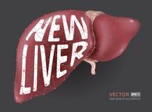 Ilustração realística do vetor da geometria baixo-poli consistindo, das linhas e dos pontos do fígado humano novo Imagem de Stock