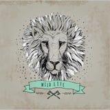 Ilustração retro do projeto da cabeça do leão do vetor Imagens de Stock Royalty Free