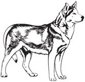 Ilustração ronca do vetor da raça do cão Imagem de Stock