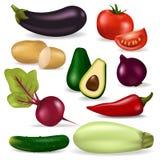 Ilustração saudável da agricultura do vegetariano fresco realístico do vetor do alimento biológico da natureza do vegetariano dos ilustração royalty free