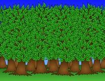Ilustração saudável da floresta Fotos de Stock Royalty Free