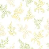 Ilustração sem emenda do esboço do teste padrão da cor gráfica da flor do jasmim Imagem de Stock