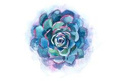 Ilustração suculento da aquarela da flor da planta do aloés do cacto ilustração do vetor