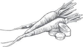 Ilustração superior da cenoura do bloco xilográfico do vetor ilustração do vetor