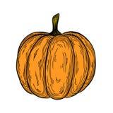 Ilustração tirada da abóbora de outono mão colorida desenho vegetal linear do ícone Imagens de Stock Royalty Free