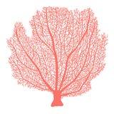 Ilustração tirada do fã mão coral imagens de stock royalty free
