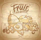Ilustração tirada do fruto mão orgânica Imagens de Stock