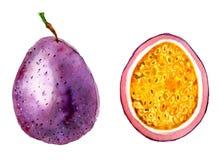Ilustração tirada mão da aquarela da fatia do fruto de paixão fotos de stock