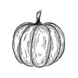Ilustração tirada mão do esboço da abóbora de outono desenho linear do ícone gráfico Imagens de Stock