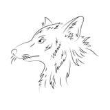 Ilustração tirada mão do lápis do vetor do lobo Fotos de Stock